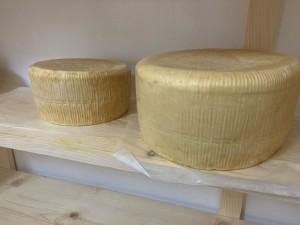 DRQSICANI formaggi2