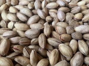 pistacchio DRQSICANI